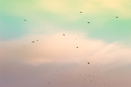 migratory: A flock of migratory birds in the sky. Creative vintage filter, retro effect Stock Photo