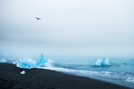 iceberg: Beautiful blue icebergs on the beach with black volcanic sand. Beautiful coast of Atlantic ocean, Southern Iceland