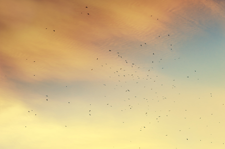 migratory birds: A flock of migratory birds in the sky at sunset. Creative vintage filter, retro effect Stock Photo