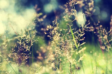 Bos weide met wilde grassen. Macro beeld met een kleine scherptediepte. Vintage filter