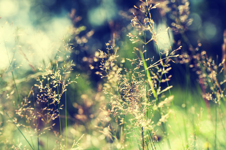Forest meadow with wild grasses. Macro image with small depth of field. Vintage filter Standard-Bild