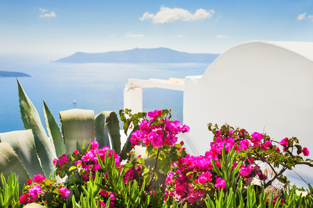 Flowers in the garden with sea view, selective focus. Santorini island, Greece.
