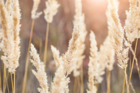 Forest meadow with wild grasses at sunset. Macro image with small depth of field.