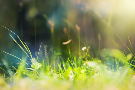 Green wild grass on a forest meadow. Macro image with small depth of field. Vintage filter