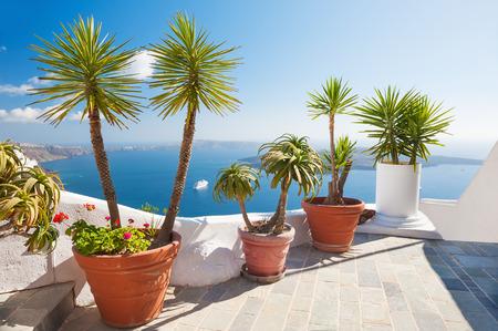 Flowers on the terrace. Beautiful landscape with sea view. Santorini island, Greece.