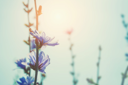 Wild flowers in a field at sunset. Vintage filter, retro effect