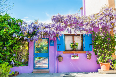 Violet house and flowers. Colorful houses in Burano island near Venice, Italy Stock Photo
