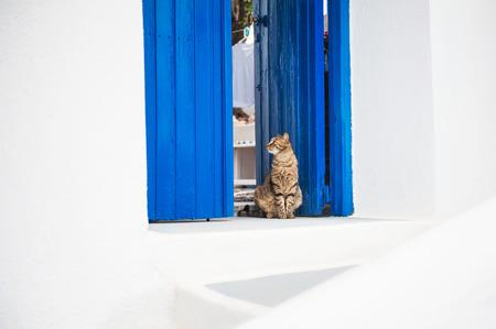 doorstep: Cat sitting on the doorstep. White and blue architecture on Santorini island, Greece. Stock Photo