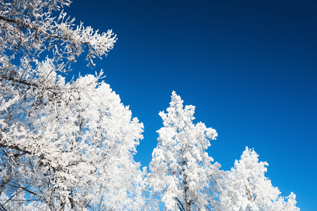 Trees with hoarfrost against the blue sky. Beautiful winter landscape