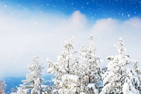 Snow-covered trees in the forest. Beautiful winter landscape. Stock Photo