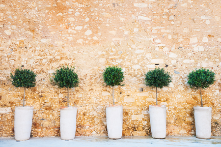 rethymno: Olive trees on the stone wall background, Crete, Greece