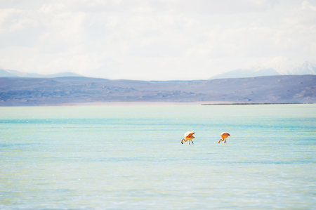 avaroa: Two pink flamingo in the lagoon on the plateau Altiplano, Bolivia Stock Photo