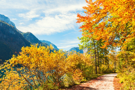 Pathway with yellow autumn trees. Vorderer Langbathsee lake in Austrian Alps.
