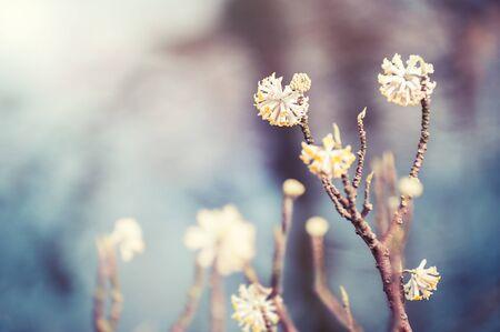Blooming wild plants. Selective focus, vintage filter. Spring nature background