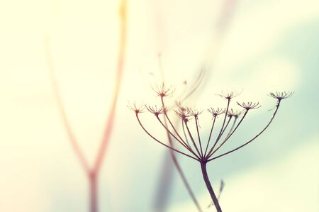 Wild grasses against the sky at sunset. Shallow depth of field, vintage filter