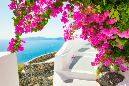 Beautiful terrace with pink flowers on Santorini island, Greece Stockfoto