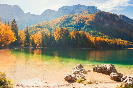 Yellow autumn trees on the shore of Vorderer Langbathsee lake in Alps mountains, Austria