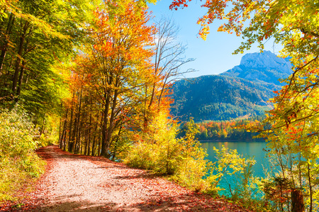 Road with yellow autumn trees on the shore of Vorderer Langbathsee lake in Alps mountains, Austria Zdjęcie Seryjne