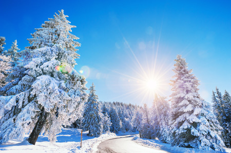 Winter road with snow-covered trees at sunny day. Beautiful winter landscape. Lens flare effect