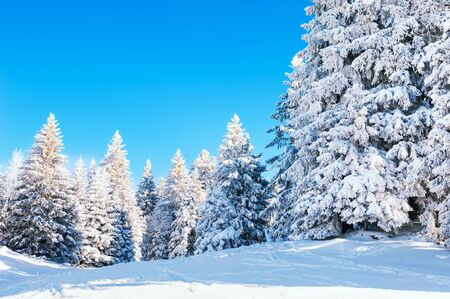 Snow-covered trees in winter forest. Beautiful winter landscape. Alps, France Stockfoto