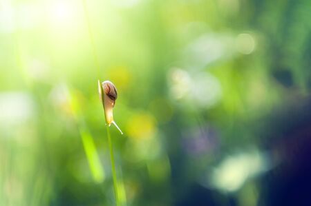 Little snail on the green grass in the morning sunlight. Macro image. Beautiful summer nature background