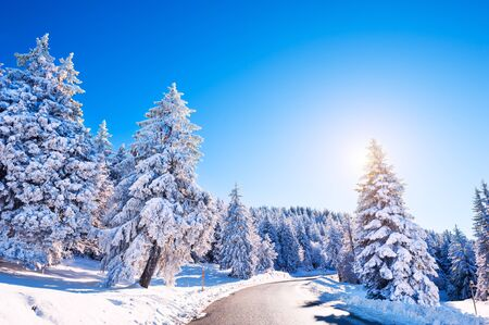 Winter road with snow-covered trees in the forest, Alps mountains, France. Beautiful winter landscape