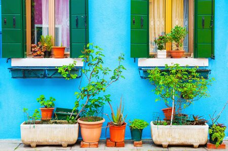 Blue wall of the house and green plants in the pots. Colorful architecture in Burano island, Venice, Italy.