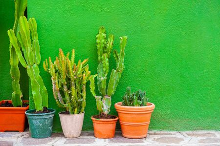 Green cactuses in the pots against the green wall. Colorful architecture in Burano island, Venice, Italy.