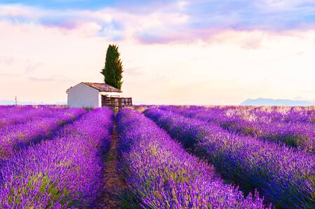 Small house in lavender fields at sunrise near Valensole, Provence, France. Beautiful summer landscape. Famous travel destination