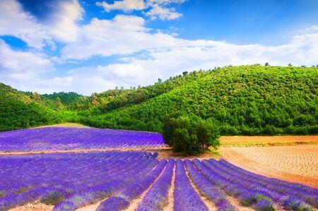 Campos de lavanda y colinas verdes en Provenza, Francia. Hermoso paisaje de verano. Foto de archivo