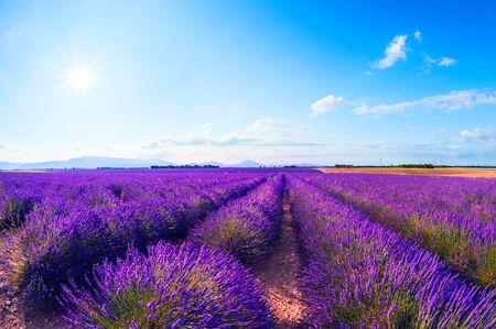 Lavender flowers in Provence, France. Beautiful summer landscape Foto de archivo