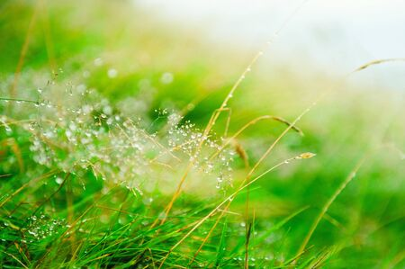 Green grass with water drops during the rain. Macro image, shallow depth of field. Beautiful summer nature background