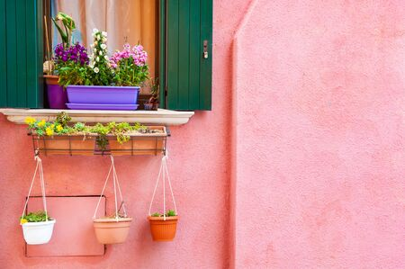 Window with green shutters and flowers on the pink wall. Colorful architecture in Burano island, Venice, Italy.