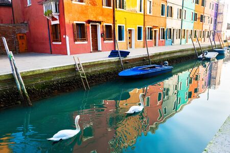 Two white swans floating on the canal n Burano island, Venice, Italy. Colorful architecture with reflections in the water