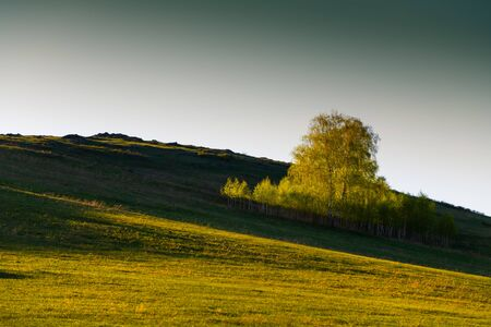 Green birch trees on the hills with fresh green grass at sunset. Beautiful summer landscape. South Ural, Russia