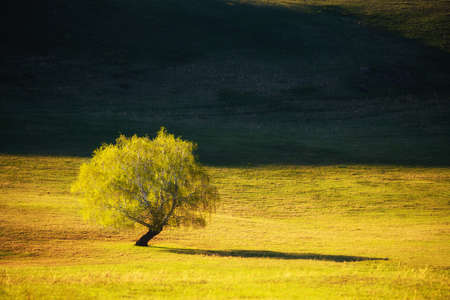 Green tree on the meadow in the mountains. Beautiful summer nature background