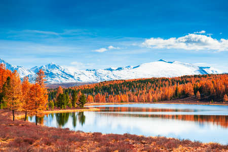 Kidelu lake in Altai mountains, Siberia, Russia. Snow-covered mountain peaks with yellow autumn forest. Beautiful autumn landscape. Reklamní fotografie