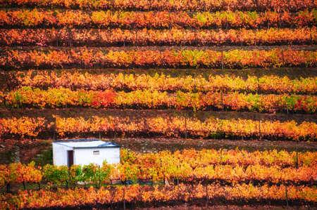 Vineyards in Douro river valley in Portugal. Portuguese wine region. Beautiful autumn landscape Reklamní fotografie