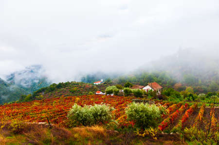 Vineyards in Douro river valley in misty morning, Portugal. Portuguese wine region. Beautiful autumn landscape