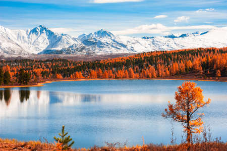 Snow-covered mountain peaks with yellow autumn forest. Beautiful autumn landscape. Reklamní fotografie