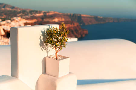 Small olive tree on the terrace with sea view. Beautiful sunset at Santorini island, Greece.