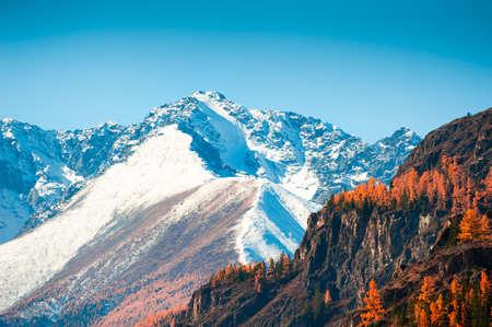 Snow-covered mountain peaks and yellow trees. Autumn landscape in Altai, Siberia, Russia. North-Chuya mountain ridge