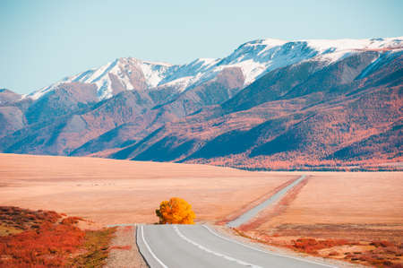 Beautiful road with yellow tree in autumn mountains at sunset. Chuysky tract and view of North-Chuya mountain ridge in Altai, Siberia, Russia.