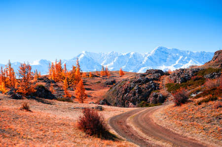 Road in autumn mountains. Kurai steppe and view of North-Chuya mountain ridge in Altai, Siberia, Russia. Yellow trees and snow-covered mountain peaks.