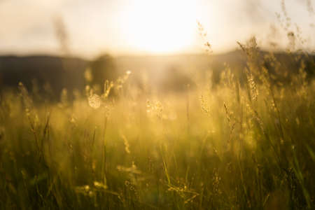 Green grass in a forest at sunset. Blurred summer nature background. Reklamní fotografie