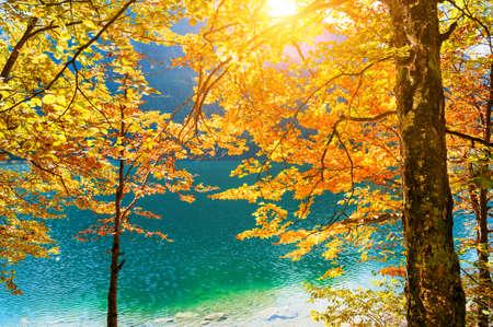 Yellow autumn trees on the shore of lake in Alps, Austria. Beautiful autumn landscape Reklamní fotografie