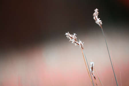 Wild grasses in a forest meadow. Macro image, shallow depth of field. Beautiful autumn nature background