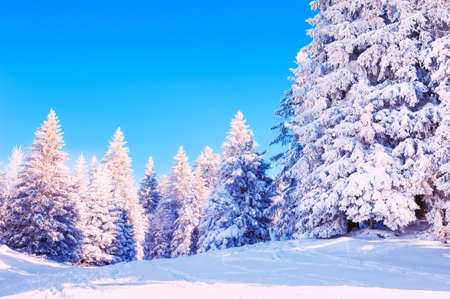 Snow-covered trees in winter forestat sunny day. White snow and the blue sky. Beautiful winter landscape. Reklamní fotografie