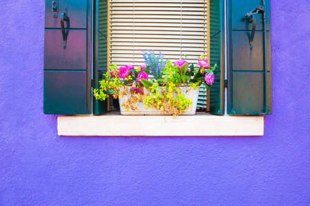 Window with flowers on the violet painted facade of the house. Colorful architecture in Burano island, Venice, Italy.