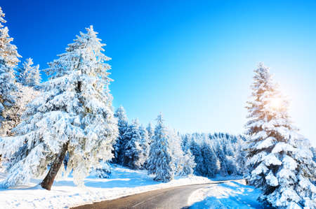 Winter road with snow-covered trees in the mountains at sunny day. Beautiful winter landscape, nature background
